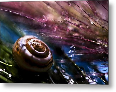 Untitled Metal Print by S. Amer