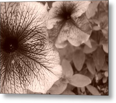 Up Close Metal Print by Jennifer Compton