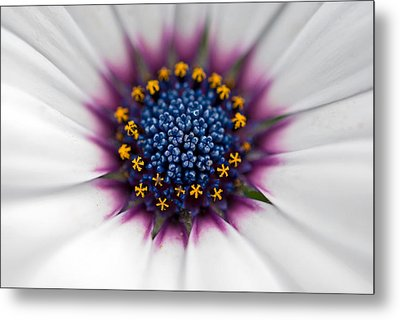 Up Close Metal Print by Maria Dryfhout