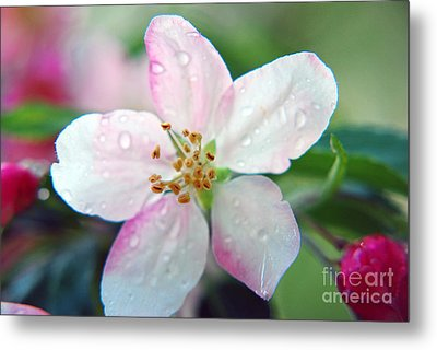 Metal Print featuring the photograph Up Close Spring Blossom  by Lila Fisher-Wenzel