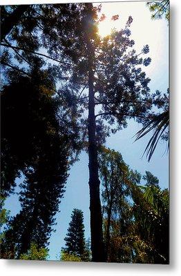 Up In The Sky Trees Metal Print