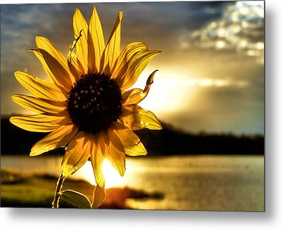 Up Lit Metal Print by Karen Scovill