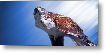 Upon His Perch Metal Print
