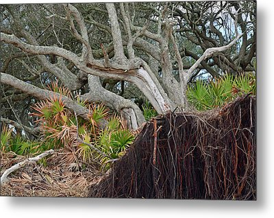 Uprooted Metal Print by Bruce Gourley