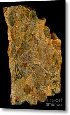 Uranium Ore Conglomerate Metal Print by Ted Kinsman