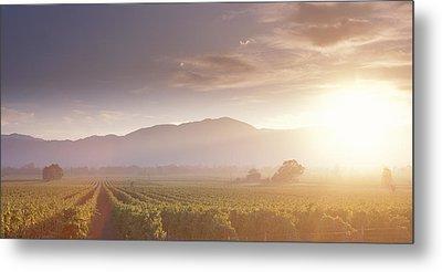 Usa, California, Napa Valley, Vineyard Metal Print by Panoramic Images