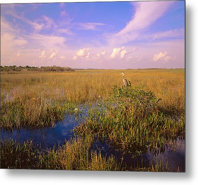 Usa, Florida, Everglades National Park Metal Print by Panoramic Images