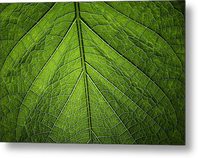 Metal Print featuring the photograph Usbg Leaf One by Kevin Blackburn