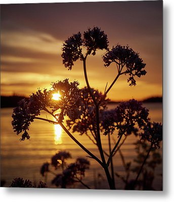 Valerian Sunset Metal Print