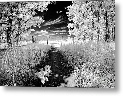 Valley Of Light Metal Print