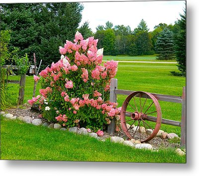 Vanilla Strawberry Hydrangea Metal Print