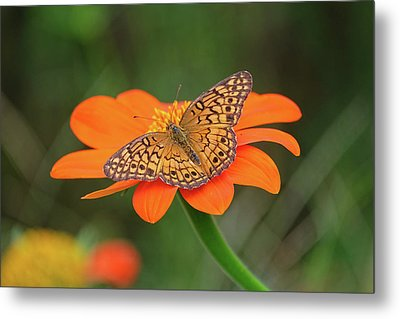 Variegated Fritillary On Flower Metal Print