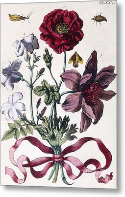 Various European Insects And Flowers Metal Print by Maria Sibylla Graff Merian