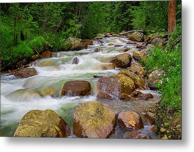 Metal Print featuring the photograph Velvet Green Forest by Tim Reaves