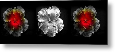 Vibrant Flower Series 3 Metal Print by Jen White
