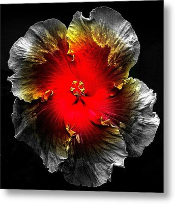 Vibrant Flower Series Metal Print by Jen White