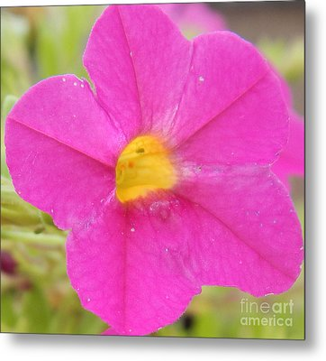 Vibrant Pink Flower Metal Print
