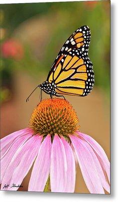 Monarch Butterfly On A Purple Coneflower Metal Print by Jeff Goulden