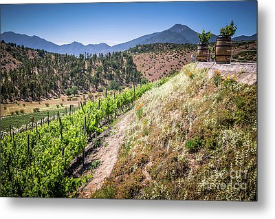 View Of The Vineyard. Winery In Casablanca, Chile. Metal Print by Anna Soelberg