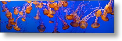 View Of Jelly Fish Underwater Metal Print by Panoramic Images
