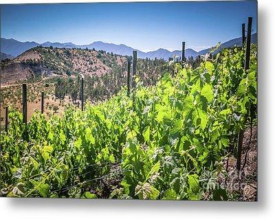 View Of The Vineyard. Winery In Chile, Casablanca Valley Metal Print by Anna Soelberg
