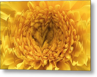 Metal Print featuring the photograph View Within by Shari Jardina