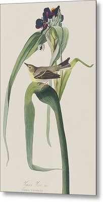 Vigor's Warbler Metal Print by John James Audubon