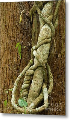 Metal Print featuring the photograph Vine by Werner Padarin