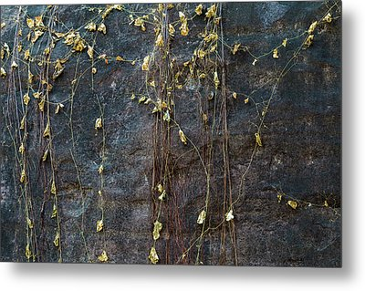 Metal Print featuring the photograph Vines On Rock, Bhimbetka, 2016 by Hitendra SINKAR