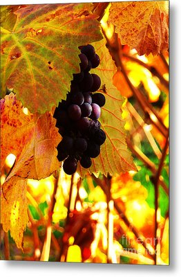 Vineyard 20 Metal Print by Xueling Zou
