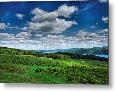 Vineyard And Lake Metal Print