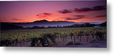 Vineyard At Sunset, Napa Valley Metal Print by Panoramic Images