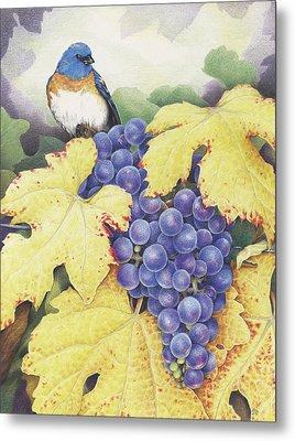 Vineyard Blue Metal Print