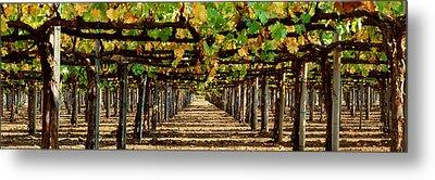 Vineyard Ca Metal Print by Panoramic Images