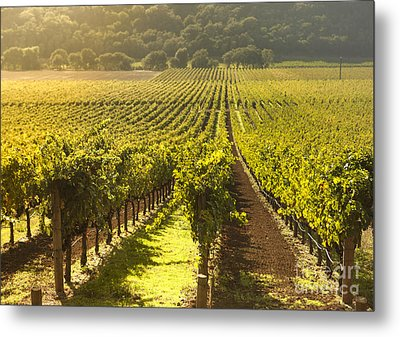 Vineyard In Napa Valley Metal Print by Diane Diederich