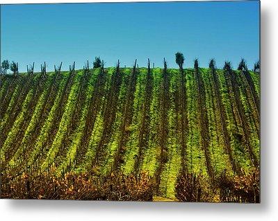 Vineyard In Tapihue 2 Metal Print by Fernando Lopez Lago