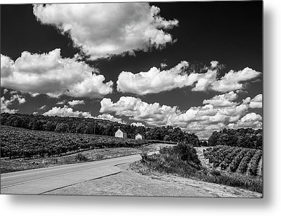 Metal Print featuring the photograph Vineyards In Summer II by Steven Ainsworth