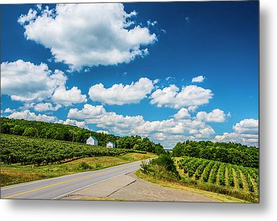 Metal Print featuring the photograph Vineyards In Summer by Steven Ainsworth