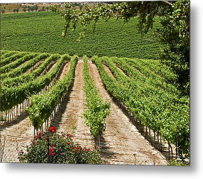 Vineyards In The Galilee 2 Metal Print