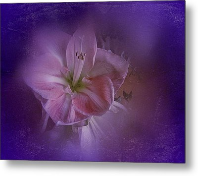 Metal Print featuring the photograph Vintage Amaryllis No. 3 by Richard Cummings