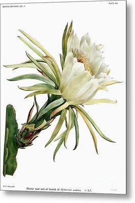 Vintage Cactus Flower Metal Print by Ramneek Narang