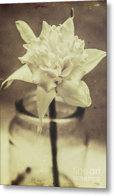 Vintage Floral Still Life Of A Pure White Bloom Metal Print