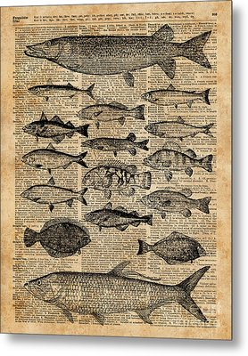 Vintage Illustration Of Fishes Over Old Book Page Dictionary Art Collage Metal Print by Jacob Kuch