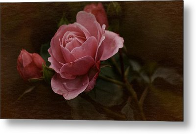 Metal Print featuring the photograph Vintage October Pink Rose by Richard Cummings