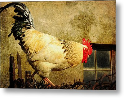Vintage Rooster Metal Print by Gary Smith