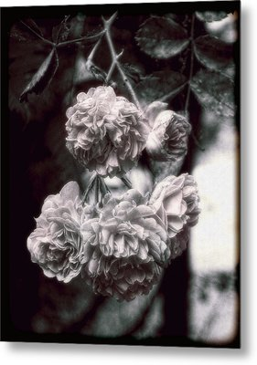 Metal Print featuring the photograph Vintage Roses by Louise Kumpf