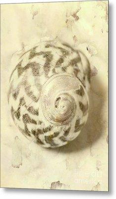 Vintage Seashell Still Life Metal Print by Jorgo Photography - Wall Art Gallery