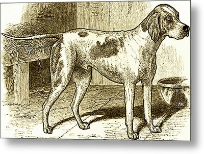 Vintage Sepia German Shorthaired Pointer Metal Print by Marian Cates