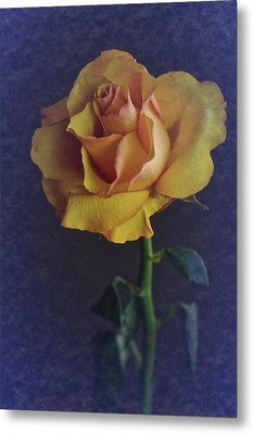 Metal Print featuring the photograph Vintage Single Rose by Richard Cummings