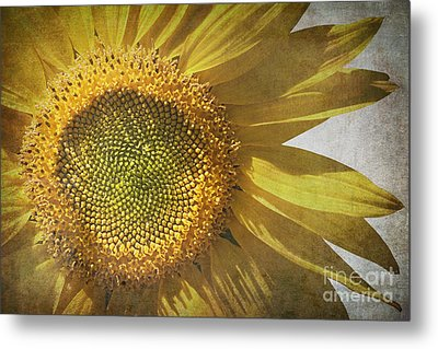 Vintage Sunflower Metal Print by Jane Rix